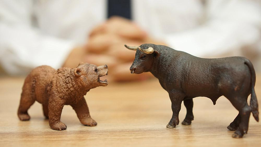 Bacho / Shutterstock.com
