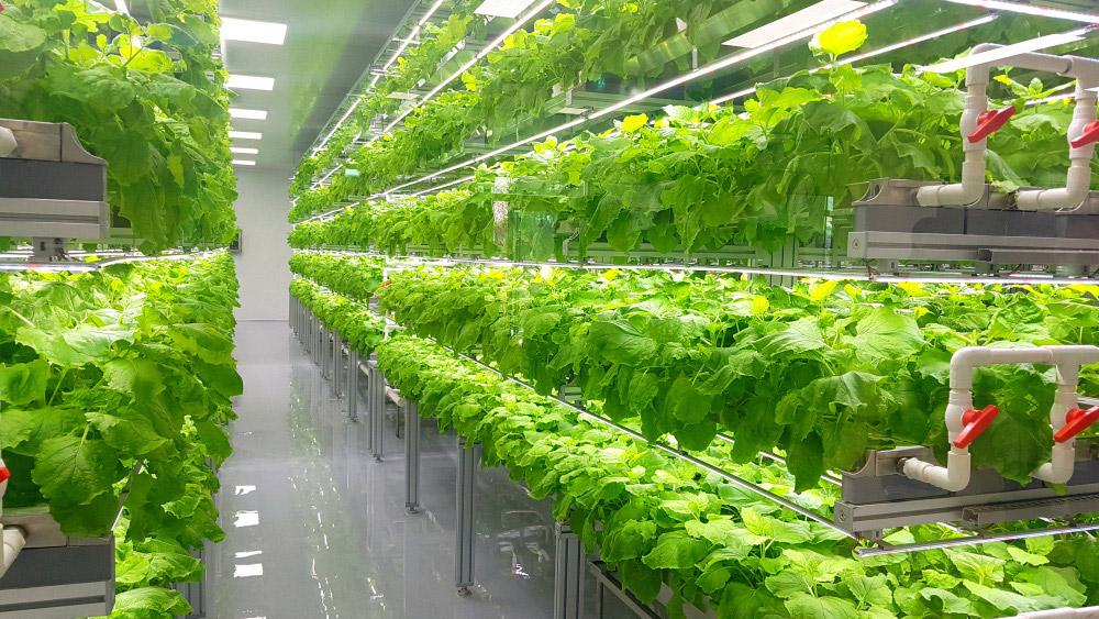 CK*Trends: Clean Food - Wie neue Technologien unsere Ernährung nachhaltiger und genussvoller machen